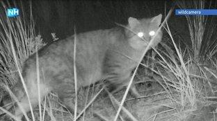 Natuurdrama op Texel: wilde katten roven nesten leeg en verslinden jonge vogels
