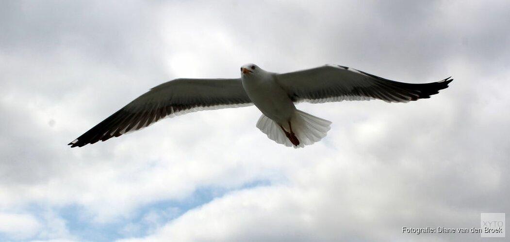 Mensen storen vogels en zeehonden op zandplaat bij Texel: vanaf nu boetes