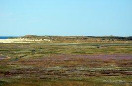 Natuurgebied De Slufter populair bij toeristen, bezoekers blijven netjes