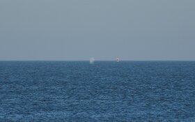 Walvis gezien voor de kust van Texel