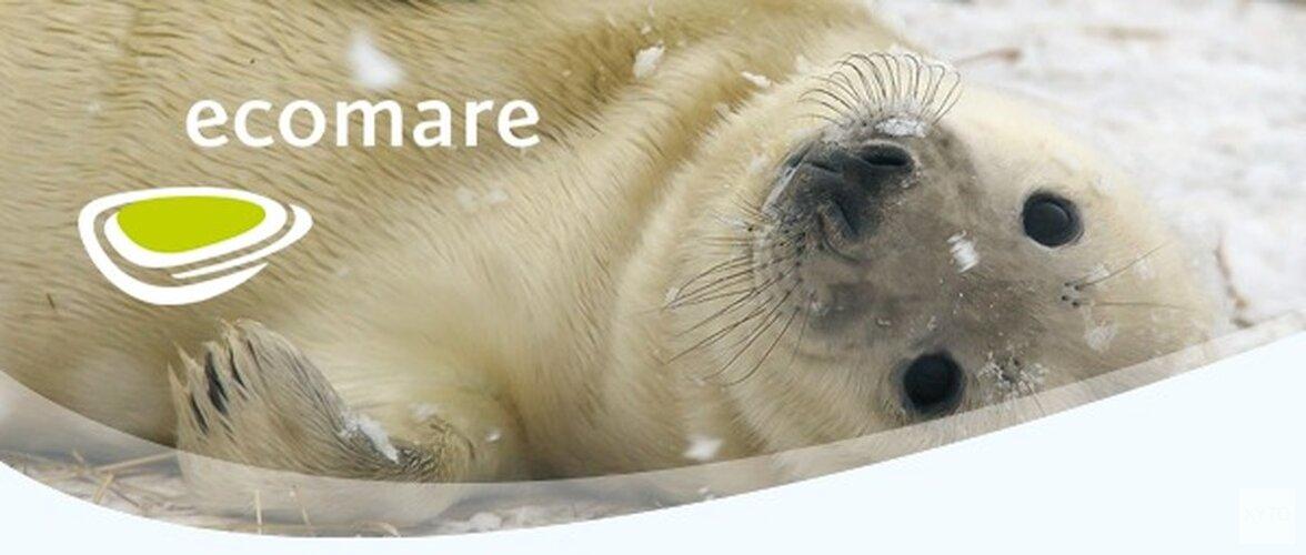 Kom naar Ecomare deze winter!