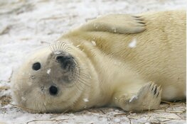 Zeehondenspelletjesdag bij Ecomare