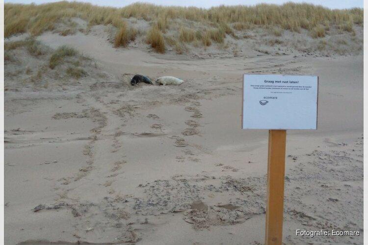 Commotie om gezonde zeehonden