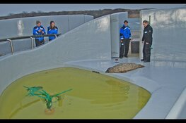 Deense zeehonden bij Ecomare
