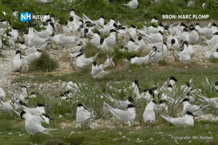 16.000 euro opgehaald voor bedreigde vogels