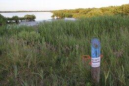 Zeldzame en mogelijk giftige blauwalg in Horsmeertjes Texel aangetroffen