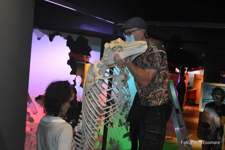 Nieuw bij Ecomare: skelet tuimelaar