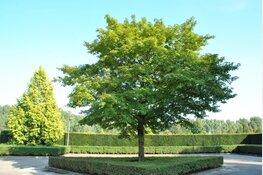 Een boom voor de Groeneplaats
